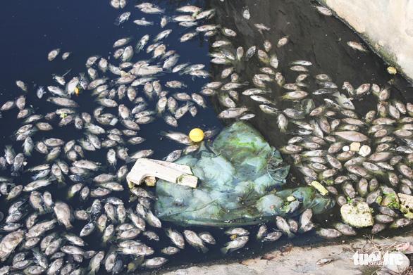 Cá chết trắng ở hồ điều hòa Cửa Nam, Nghệ An - Ảnh 3.