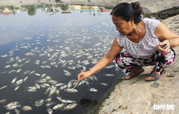 Cá chết trắng ở hồ điều hòa Cửa Nam, Nghệ An - Ảnh 5.