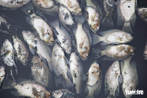 Cá chết trắng ở hồ điều hòa Cửa Nam, Nghệ An - Ảnh 4.
