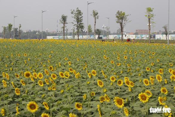 Cuối tuần đi chụp ảnh vườn hoa hướng dương ở TP.HCM - Ảnh 2.