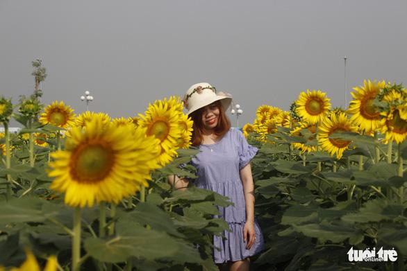 Cuối tuần đi chụp ảnh vườn hoa hướng dương ở TP.HCM - Ảnh 5.