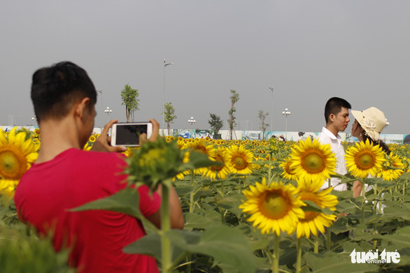 Cuối tuần đi chụp ảnh vườn hoa hướng dương ở TP.HCM - Ảnh 6.