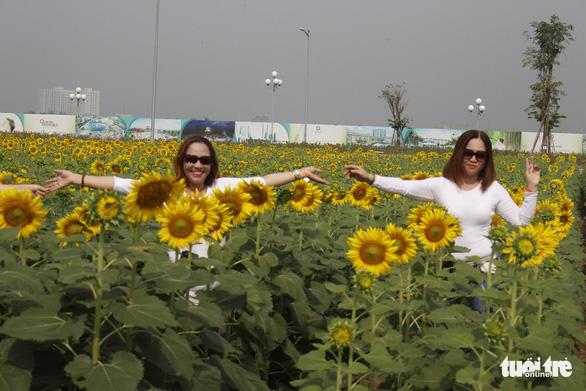 Cuối tuần đi chụp ảnh vườn hoa hướng dương ở TP.HCM - Ảnh 7.