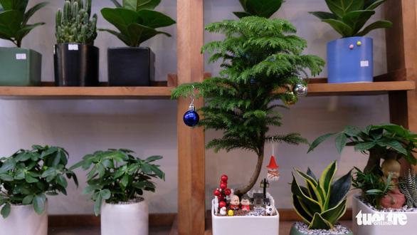 Bạn trẻ biến tấu cây xanh thân thiện môi trường mùa Giáng sinh - Ảnh 2.