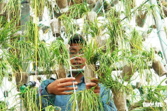Độc đáo cây thông Noel 'khủng' làm từ 8.000 giỏ hành - Ảnh 3.