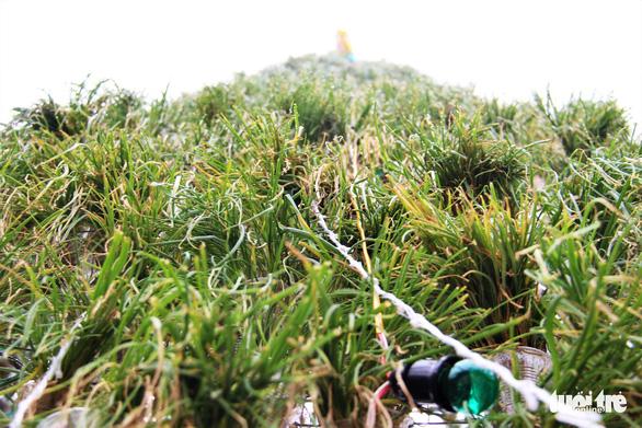 Độc đáo cây thông Noel 'khủng' làm từ 8.000 giỏ hành - Ảnh 5.