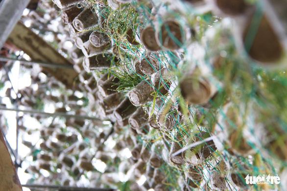 Độc đáo cây thông Noel 'khủng' làm từ 8.000 giỏ hành - Ảnh 4.