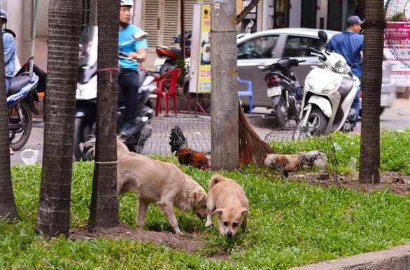 Đề xuất quản lý chó nuôi ở Hà Nội bằng phần mềm - Ảnh 1.