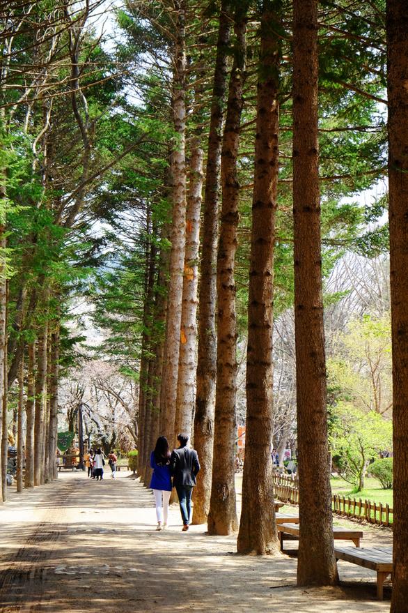 Những địa điểm check-in hot ở Nhật Bản và Hàn Quốc - Ảnh 4.