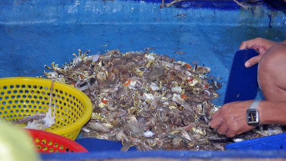 Phải nuôi dưỡng nguồn lợi hải sản - Ảnh 6.