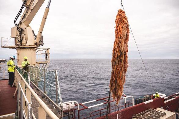 Hệ thống dọn rác đại dương 20 triệu USD thất bại sau 2 tháng? - Ảnh 4.