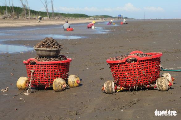 Gió chướng thổi cả cánh đồng ốc dạt vào bờ, dân đổ xô đi lượm - Ảnh 3.