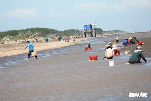Gió chướng thổi cả cánh đồng ốc dạt vào bờ, dân đổ xô đi lượm - Ảnh 8.