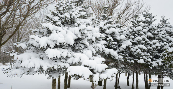 Hẹn ước cùng mùa đông xứ Hàn - Ảnh 2.
