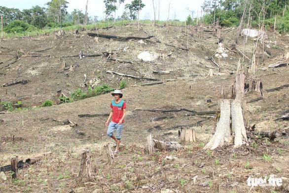 Cách chức phó chủ tịch huyện hợp thức hóa đất rừng cho vợ - Ảnh 1.