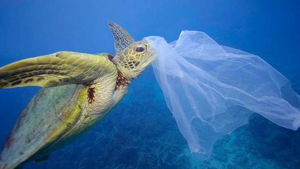 Đi du lịch nhớ gìn giữ môi trường biển - Ảnh 3.