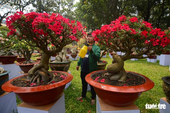 Hội hoa xuân Tao Đàn đã mở cửa đợi khách thưởng hoa - Ảnh 6.