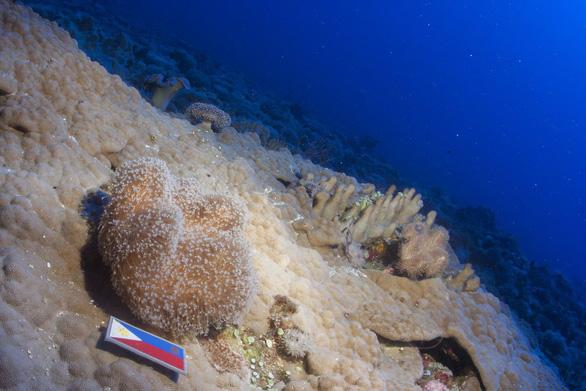 Bất kể Tết, Trung Quốc vẫn tranh phần trên biển Philippines - Ảnh 1.