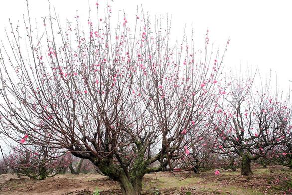 Chơi hoa Tết, chọn những loài hoa phóng khoáng tự nhiên - Ảnh 1.