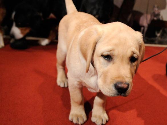 'Tan chảy' với những giống chó cưng ở Mỹ - Ảnh 12.