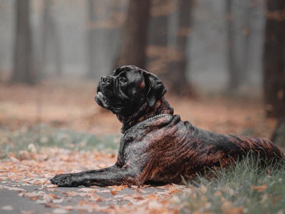 'Tan chảy' với những giống chó cưng ở Mỹ - Ảnh 13.