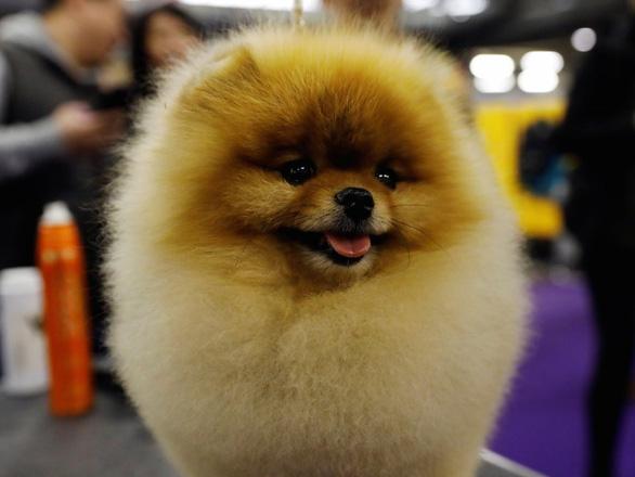 'Tan chảy' với những giống chó cưng ở Mỹ - Ảnh 18.