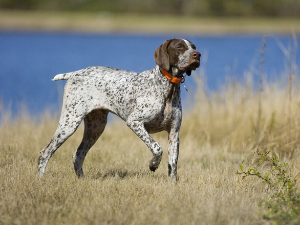 'Tan chảy' với những giống chó cưng ở Mỹ - Ảnh 19.