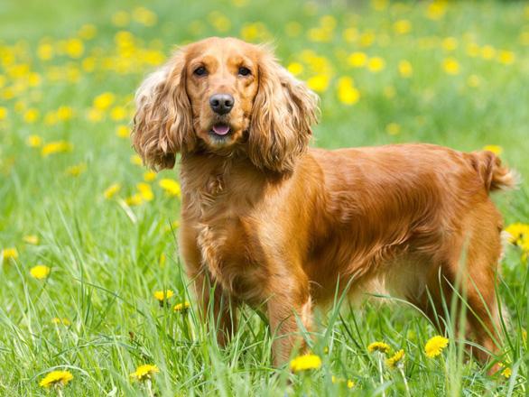 'Tan chảy' với những giống chó cưng ở Mỹ - Ảnh 20.