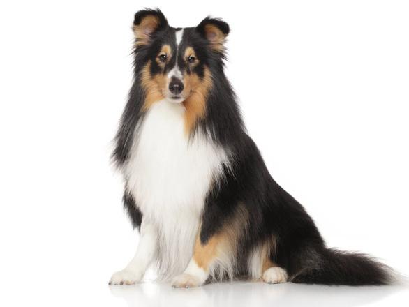 'Tan chảy' với những giống chó cưng ở Mỹ - Ảnh 21.