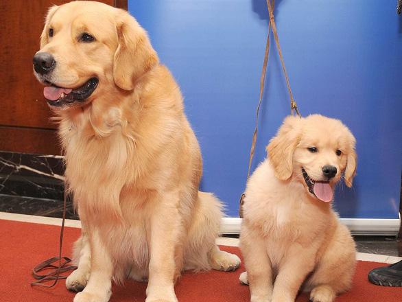 'Tan chảy' với những giống chó cưng ở Mỹ - Ảnh 22.