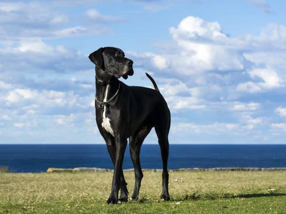 'Tan chảy' với những giống chó cưng ở Mỹ - Ảnh 23.