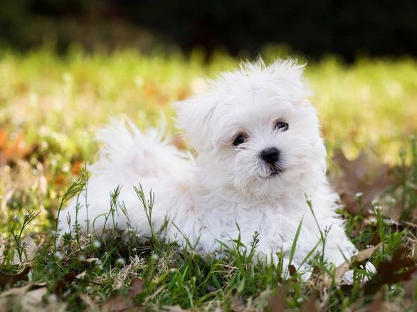 'Tan chảy' với những giống chó cưng ở Mỹ - Ảnh 4.
