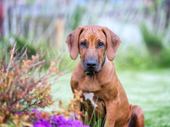 'Tan chảy' với những giống chó cưng ở Mỹ - Ảnh 5.