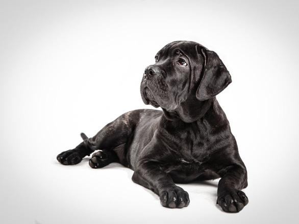 'Tan chảy' với những giống chó cưng ở Mỹ - Ảnh 7.
