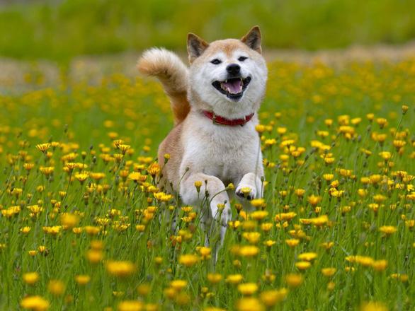 'Tan chảy' với những giống chó cưng ở Mỹ - Ảnh 9.