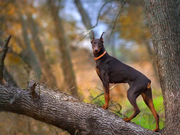 'Tan chảy' với những giống chó cưng ở Mỹ - Ảnh 10.