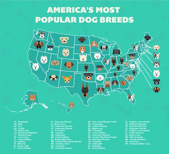 'Tan chảy' với những giống chó cưng ở Mỹ - Ảnh 1.
