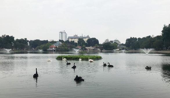 Tạm dừng thí điểm thả thiên nga ở hồ Hoàn Kiếm - Ảnh 5.