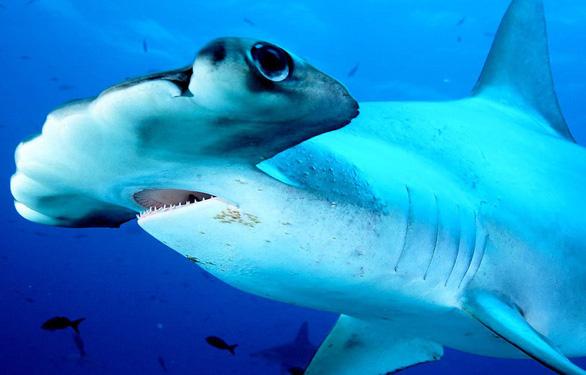 Săn cá mập lấy vi cá: tội ác thầm lặng - Ảnh 1.