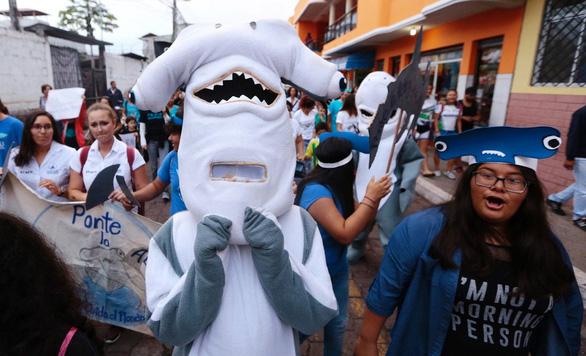 Săn cá mập lấy vi cá: tội ác thầm lặng - Ảnh 3.