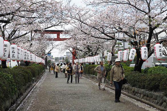 Đi Nhật Bản ngắm hoa anh đào ở đâu đẹp nhất? - Ảnh 6.