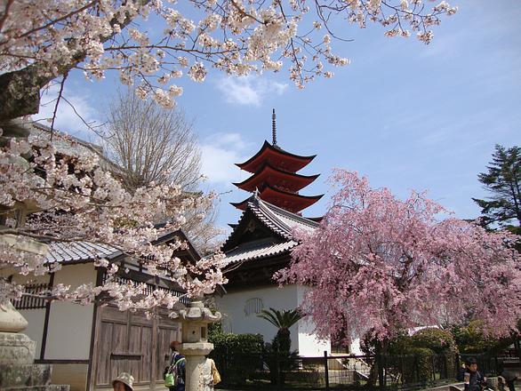 Đi Nhật Bản ngắm hoa anh đào ở đâu đẹp nhất? (phần 2) - Ảnh 3.