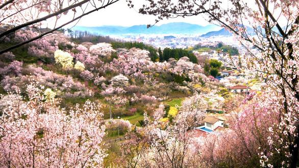 Đi Nhật Bản ngắm hoa anh đào ở đâu đẹp nhất? (phần 2) - Ảnh 6.