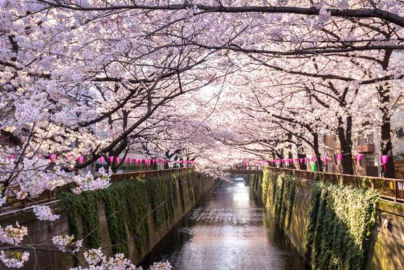 Đi Nhật Bản ngắm hoa anh đào ở đâu đẹp nhất? - Ảnh 4.
