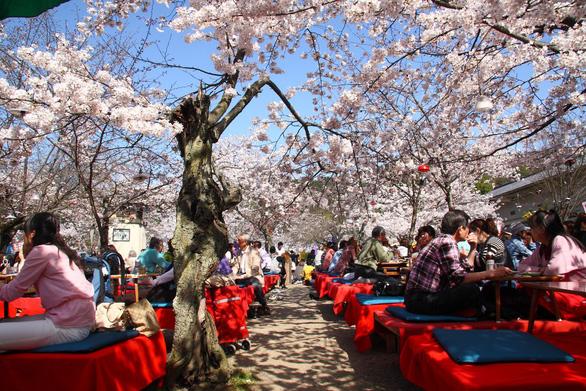 Đi Nhật Bản ngắm hoa anh đào ở đâu đẹp nhất? - Ảnh 7.