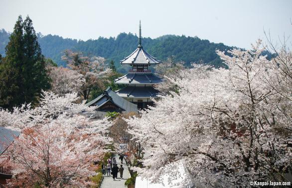 Đi Nhật Bản ngắm hoa anh đào ở đâu đẹp nhất? - Ảnh 9.