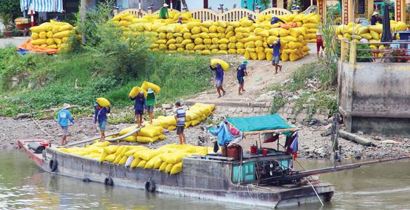Bỏ gánh nặng cho hạt gạo Việt - Ảnh 1.