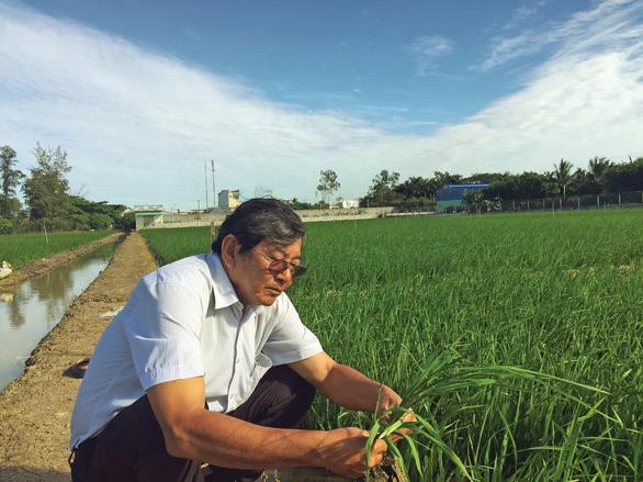 Anh hùng lao động Hồ Quang Cua - người tìm đẳng cấp gạo Việt - Ảnh 1.