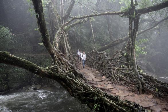Đến Ấn Độ ngắm kiệt tác cầu từ rễ cây - Ảnh 1.