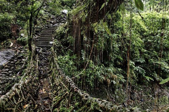 Đến Ấn Độ ngắm kiệt tác cầu từ rễ cây - Ảnh 5.